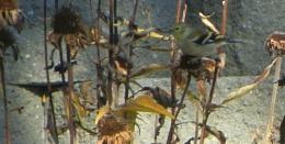 Fall Feeding