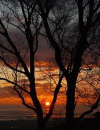Silver Birch Sunset