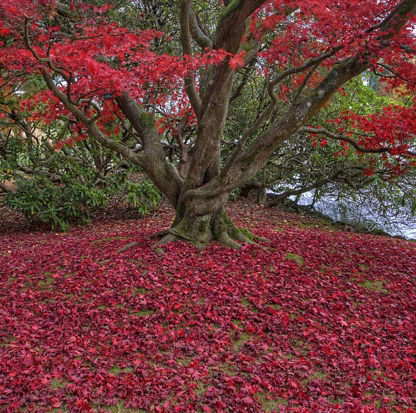 Fallen Leaves, Sheffield Park by Steve012345