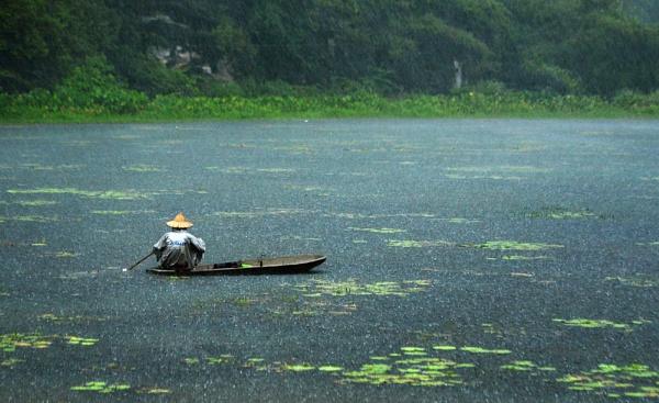 Tropical rain by mBug