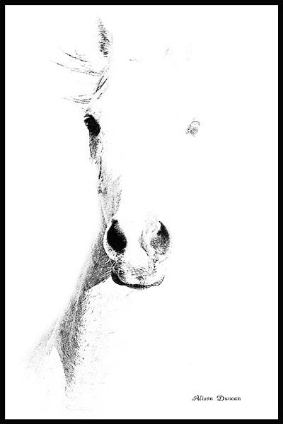 Ghostly Horse by Msalicat