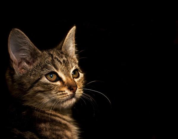 Kitten by cat001