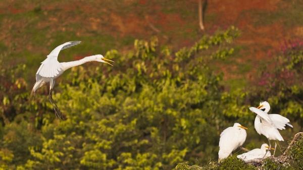 Birds by Frankphoto