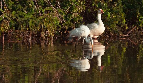 2 Birds by Frankphoto