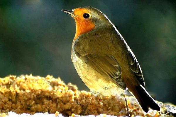 Hi my name is Robin by nazimundo