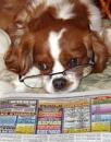 Beau's Intelligent  Eyes by cantona43
