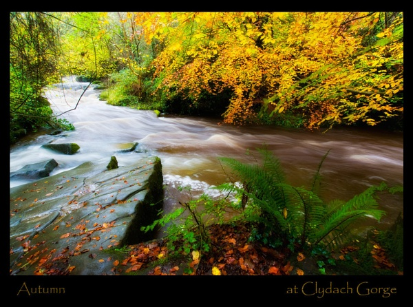 Autumn at The Gorge by Platchet
