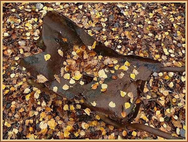 Camouflage by JPatrickM