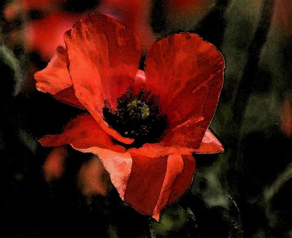 The Poppy by eonisuk