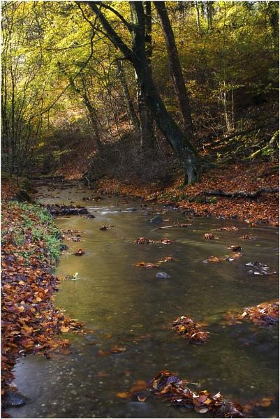 Sunnyhurst Brook by JanieB43