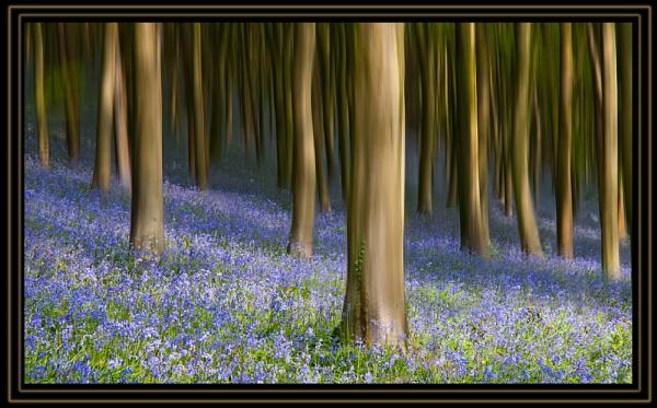 Woodland display by bryan26