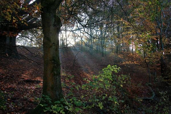 Autumn Rays. by Steve2rhino