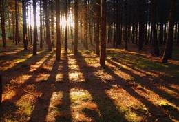 Dunwich woods at sunset