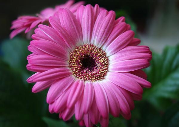 Flower Bright by Shellio