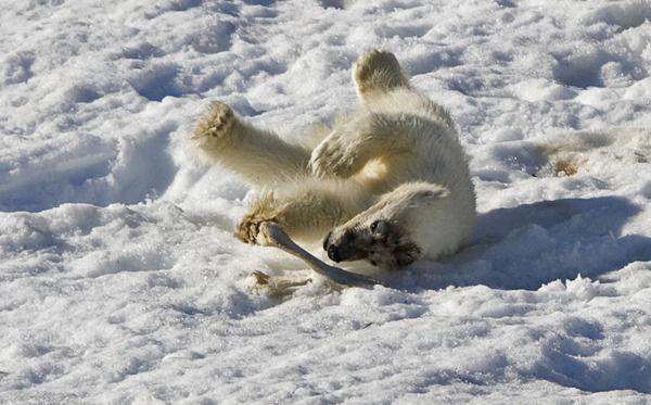 Playfull cub by hibbz