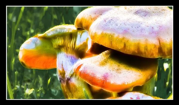 mushrooms by thatmanbrian
