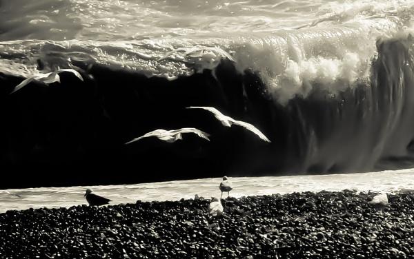 Gull-a-ble by Jazzmk