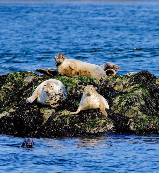 Seal-Pose by Jazzmk