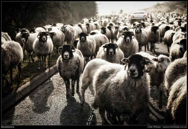 Roadblock by ade_mcfade