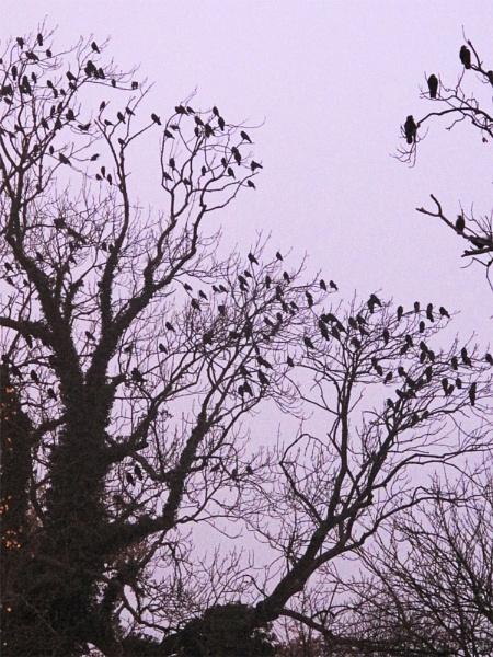 My alarm flock! by ChunkyButFunky