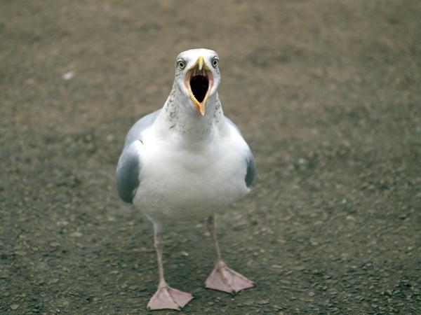 Gull by victorburnside