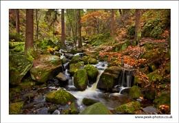Autumn in Wyming Brook