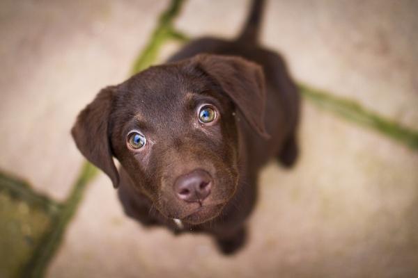 Poppy the Puppy by Britman