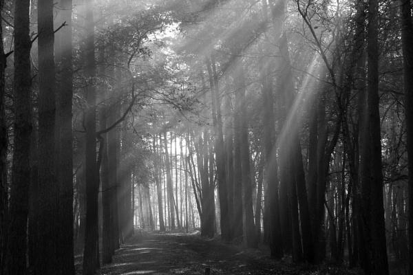 Sunlight by idz612