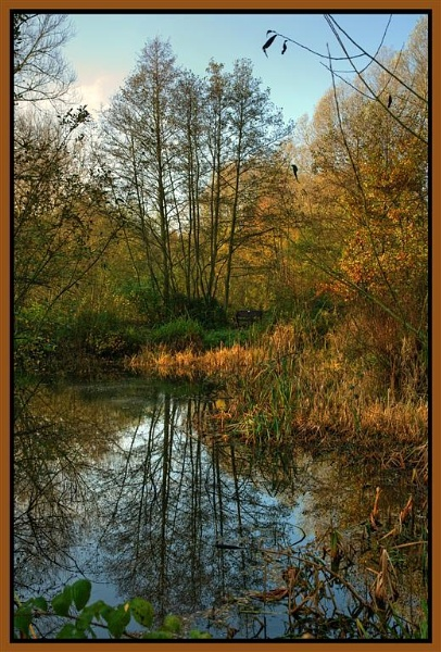 Reflection by dnwilliams
