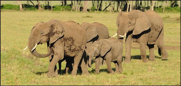 Elephant Family by HP1485