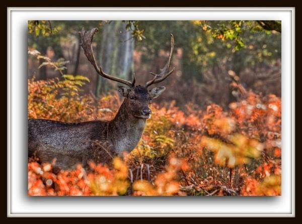 Fallow Deer by Mynett