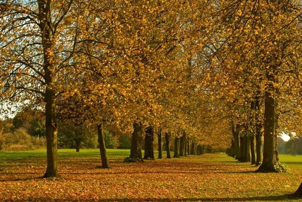 autumn marbury park by chocky