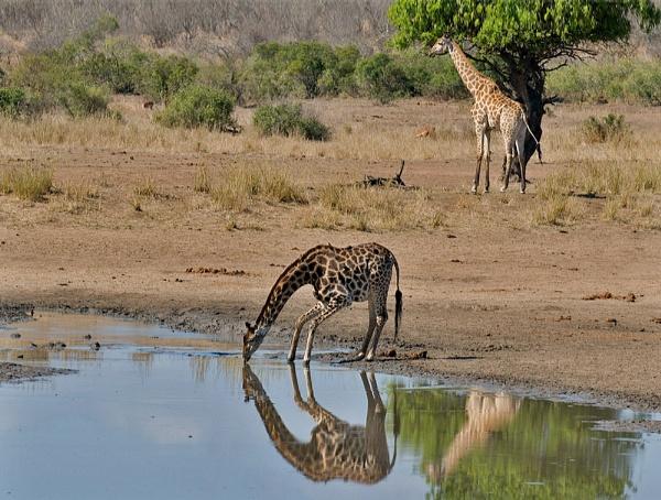 Upon Reflection by Gezina