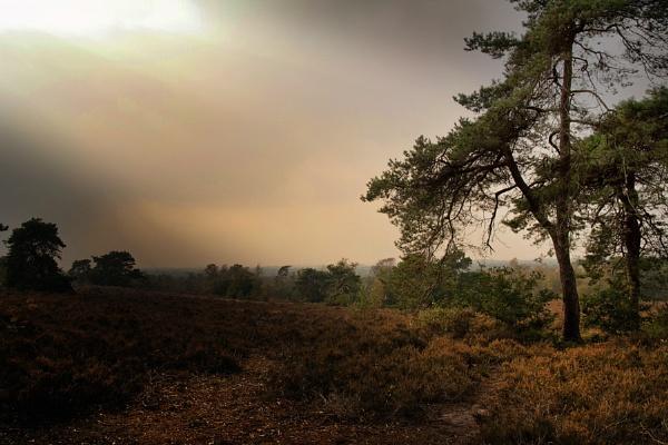 Sallandse heuvelrug by grt