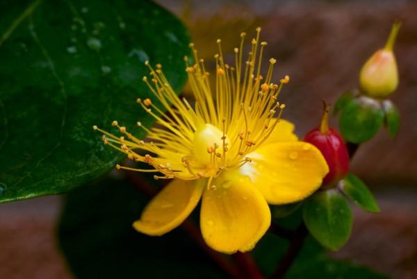flower by HuntedDragon