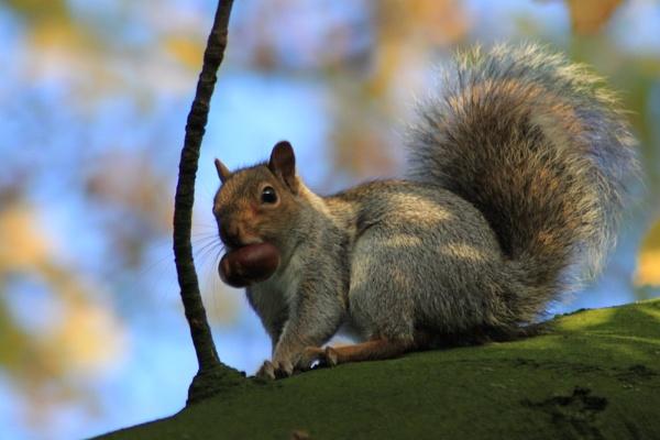 Squirrel Nut by mio2mio