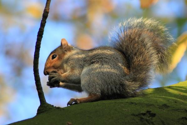 squirrel Dinner by mio2mio