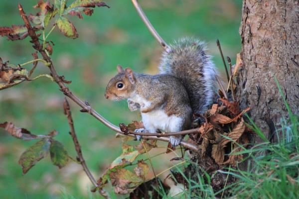 Squirrel Watching by mio2mio
