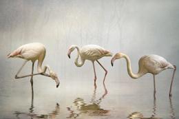 Flamingo Mist
