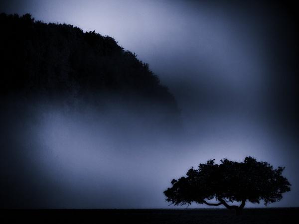 Fog & Silhouttes by mlseawell