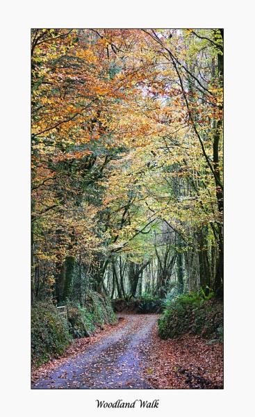 Woodland Walk by Shellio