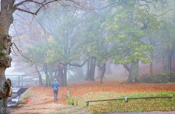 Misty walk by thatmanbrian