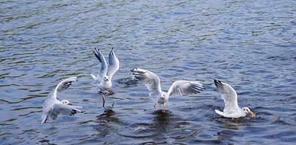 birds feeding by christinecilia