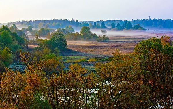 Autumn Fog by timan