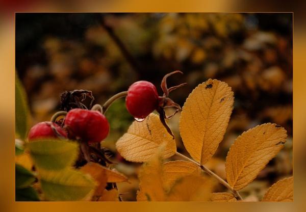Autumn Glow by Joline