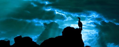 cormorant moon by andyfox