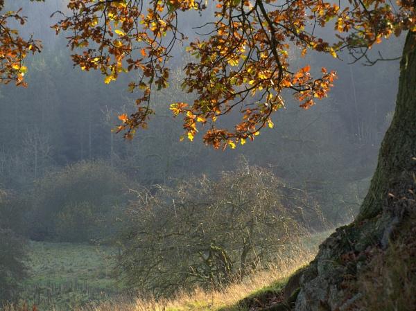 Sunlit Oak by pg349