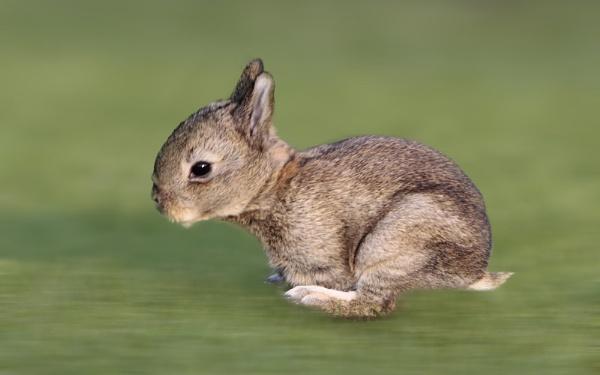 run rabbit run by GrahamDixon