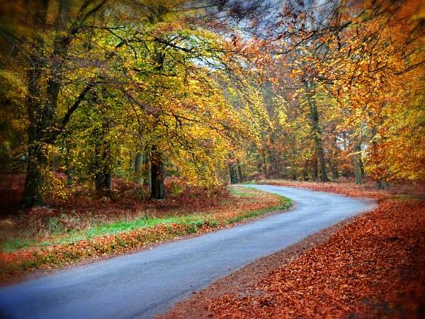 Autumn Colours at Santon Downham by sedonamoonshine
