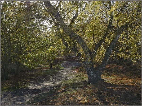 Autumn Walk 2 by f8